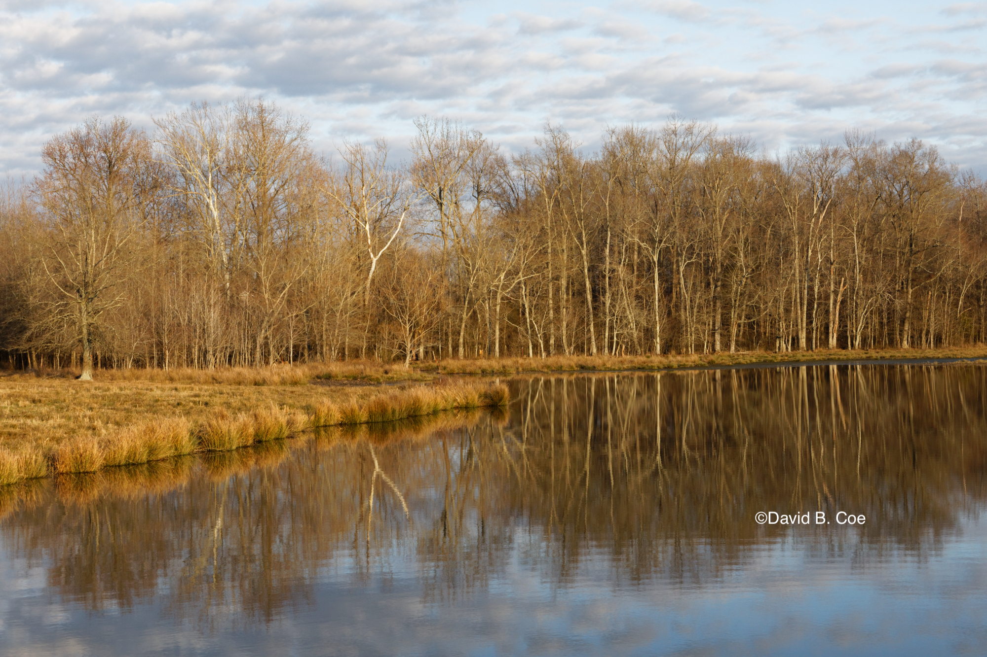 Farm Pond Reflection, by David B. Coe
