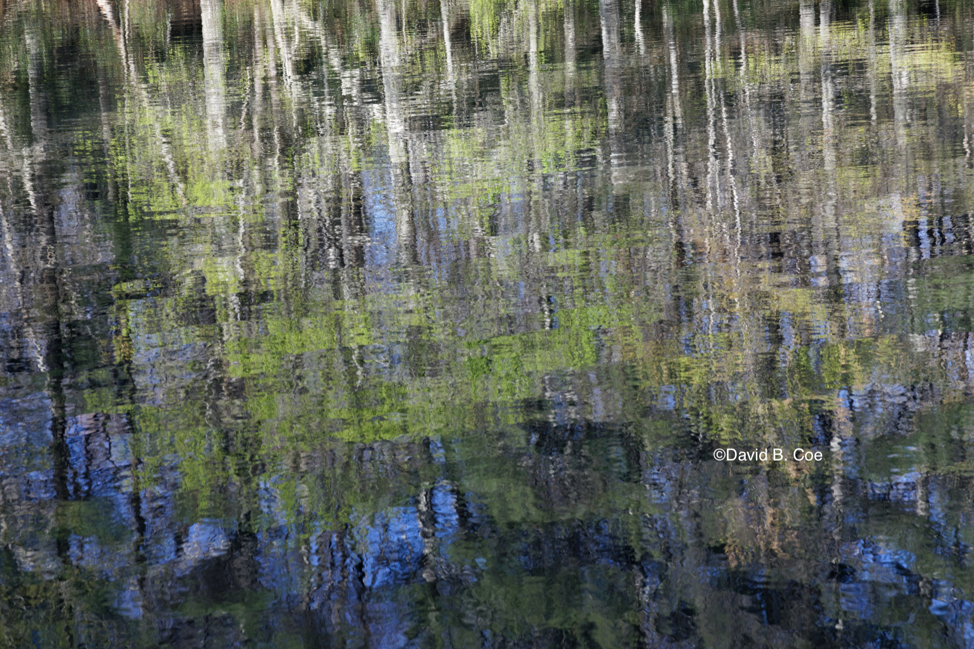 Lake Reflections, Spring, by David B. Coe