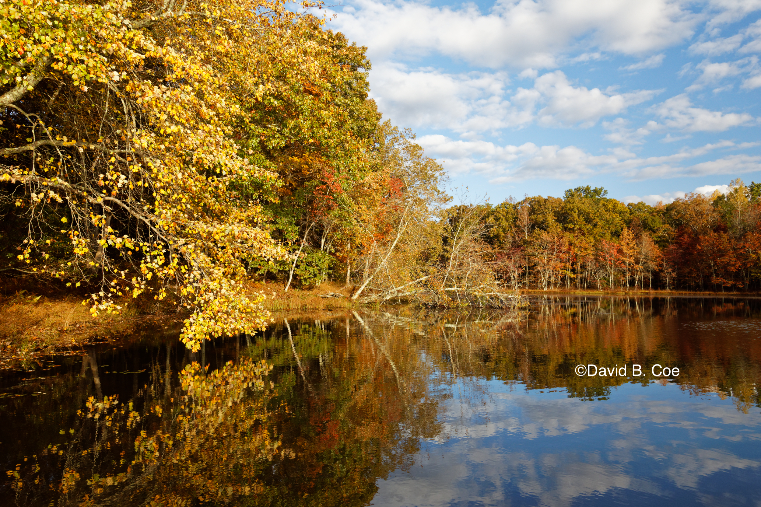 Foliage Reflections, Lake Dimmick, by David B. Coe