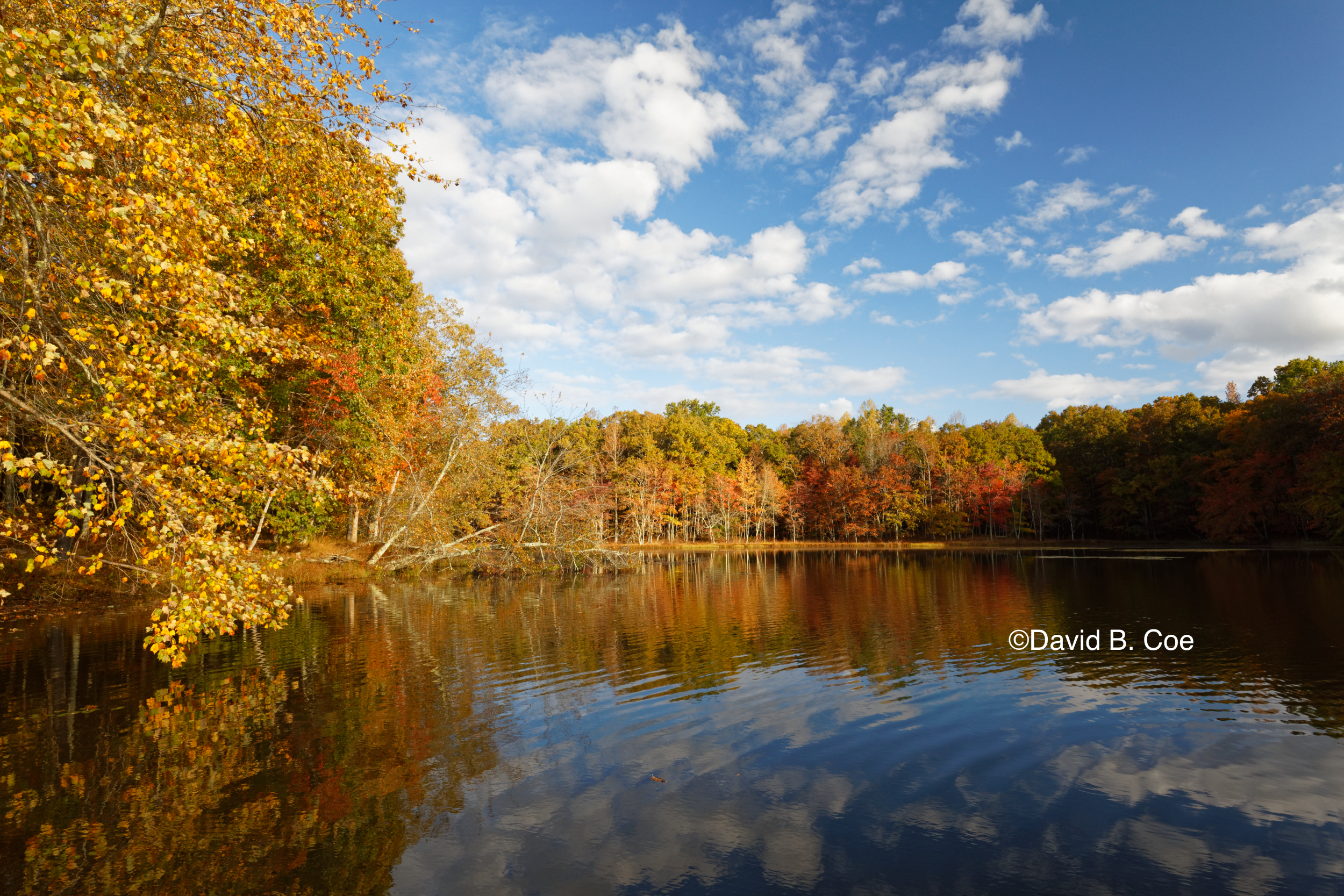 Foliage Reflections, Lake Dimmick (Wide Angle), by David B. Coe