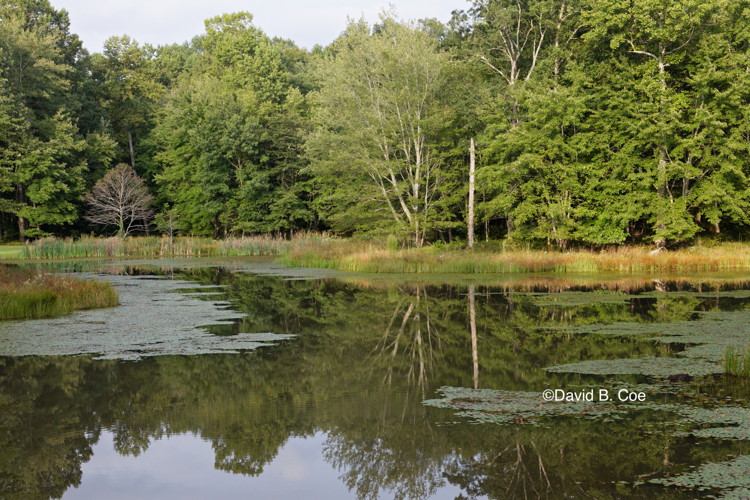 Pond Reflections, by David B. Coe