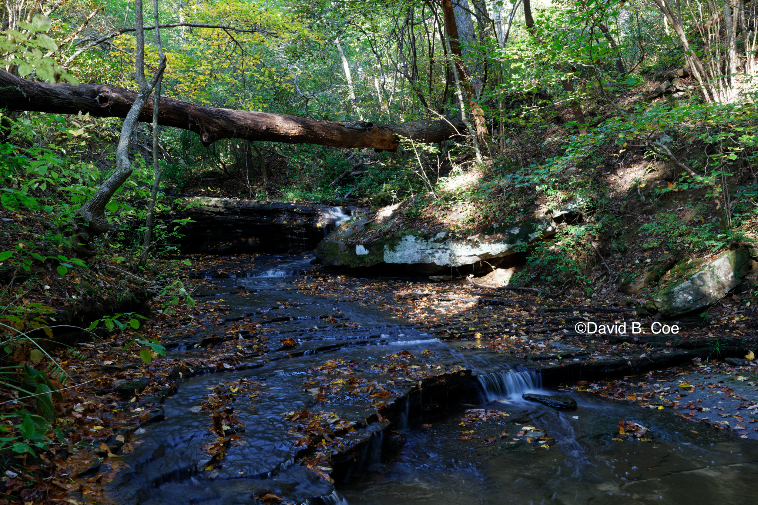 Morgan's Steep Stream, Fall, by David B. Coe