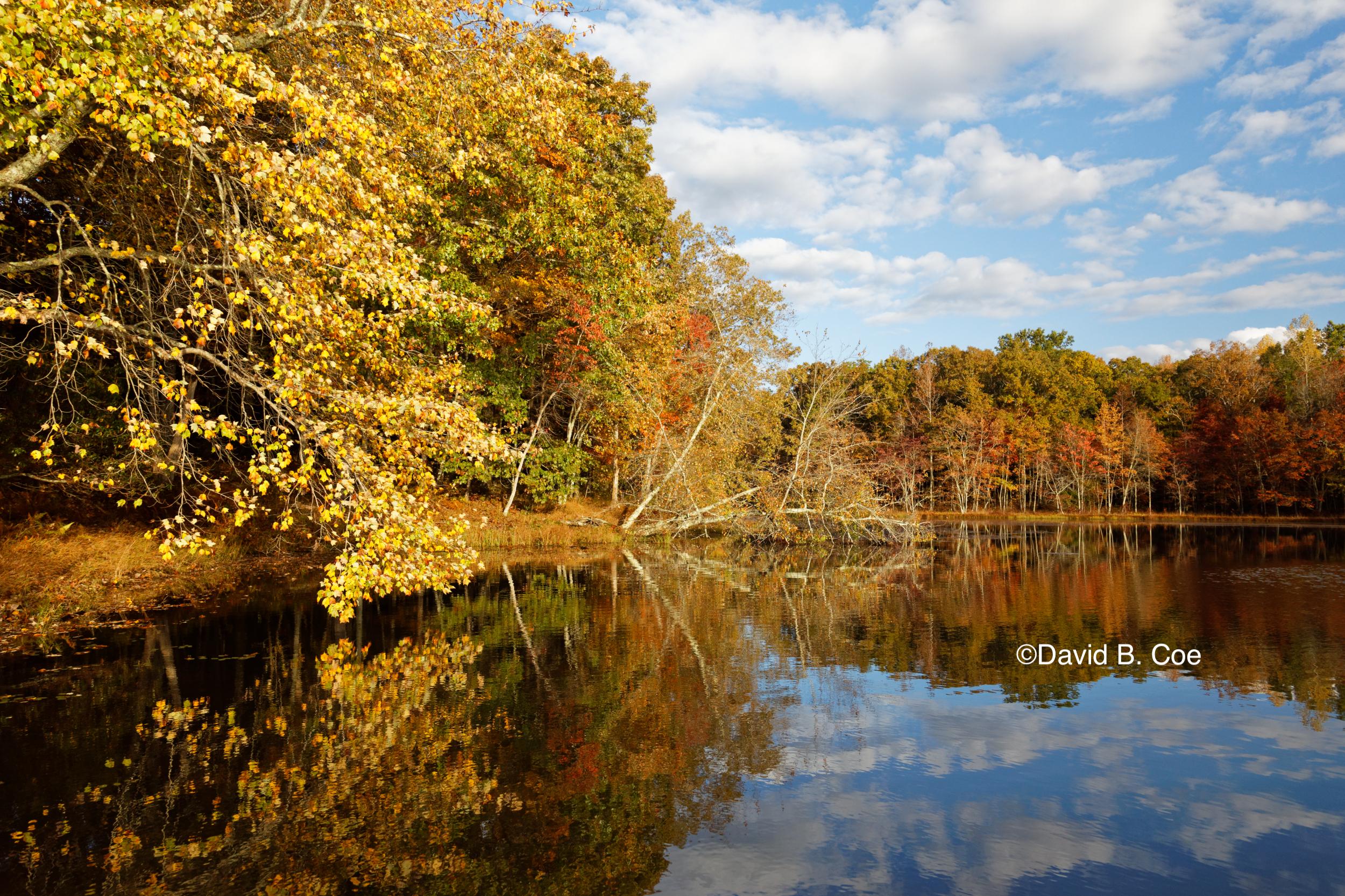 Foliage Reflections, Lake Dimmick, by David B. Coe