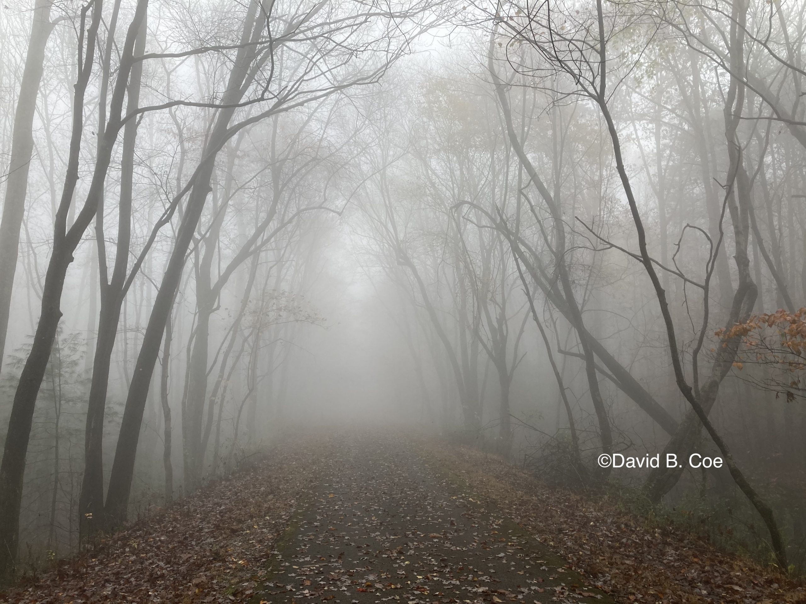 Foggy Path, by David B. Coe