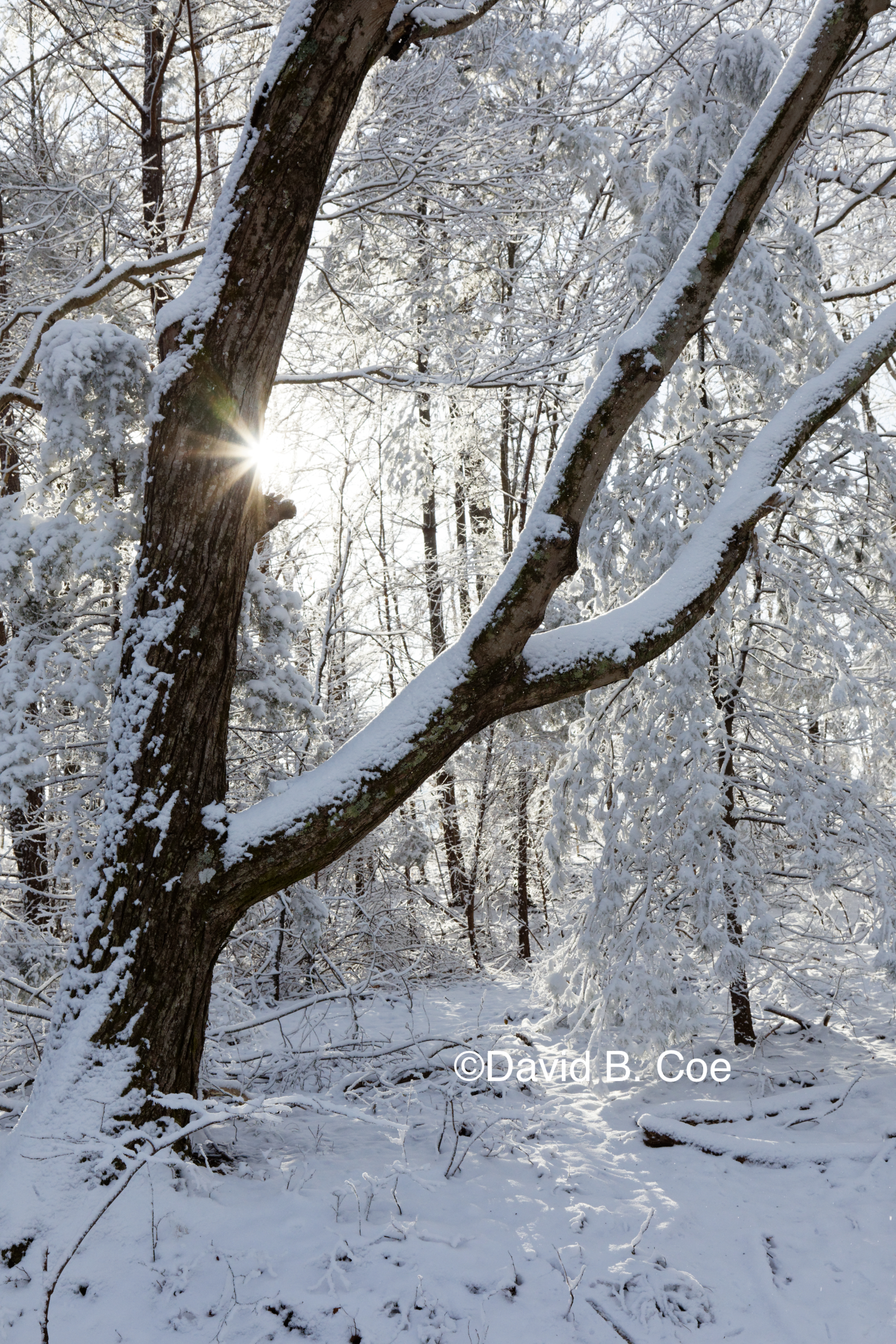 Snow and Morning Sun, by David B. Coe